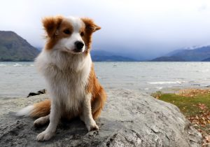 Wizzid-Aspriring-Avalanche-Dogs